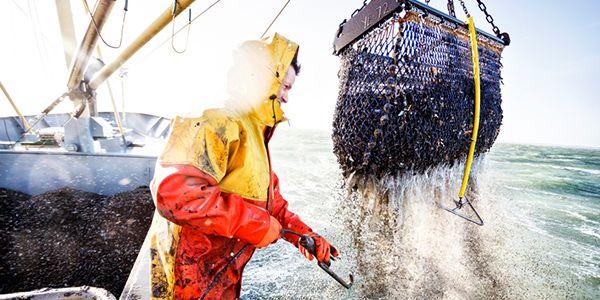 mosselvisser op het water Verse mosselen? Die bestel je online!